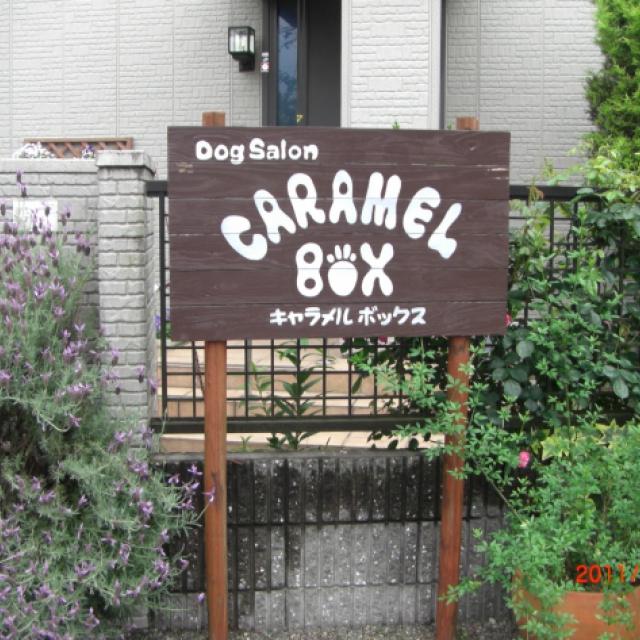 Dog Salon  CARAMEL BOX